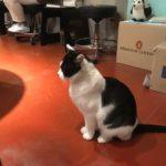 【釜山/西面(ソミョン)】猫ちゃんがいる昔の家をリノベーションカフェ