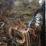 【釜山/キジャン】アウトレット近くに蟹専門のお店があります!