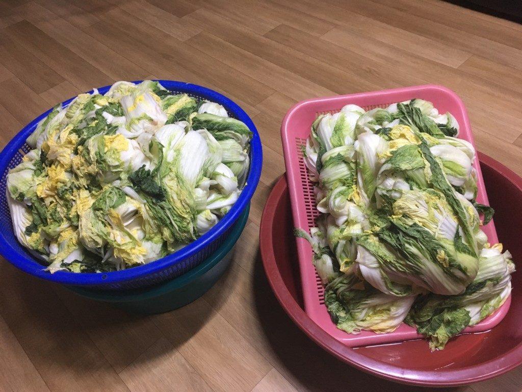 ▲白菜準備