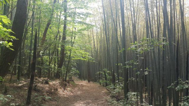 ▲アホプ山の林
