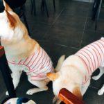 【釜山カフェ】マンミ駅 1人OK 珍島犬がいるカフェ