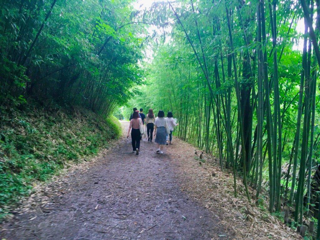 ▲アホプサン森( 아홉산숲 )