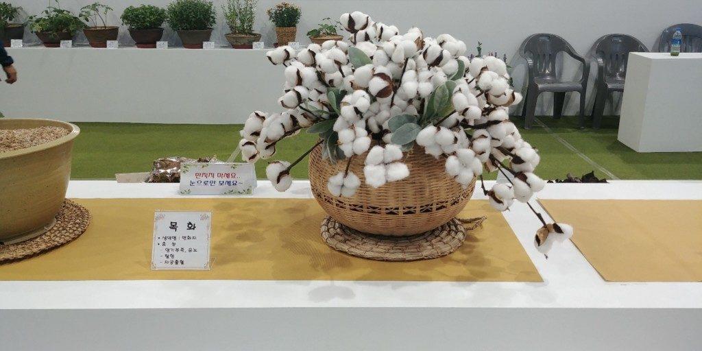 ▲山清漢方薬草祭り