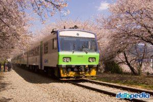 鎮海軍港祭(桜祭り)
